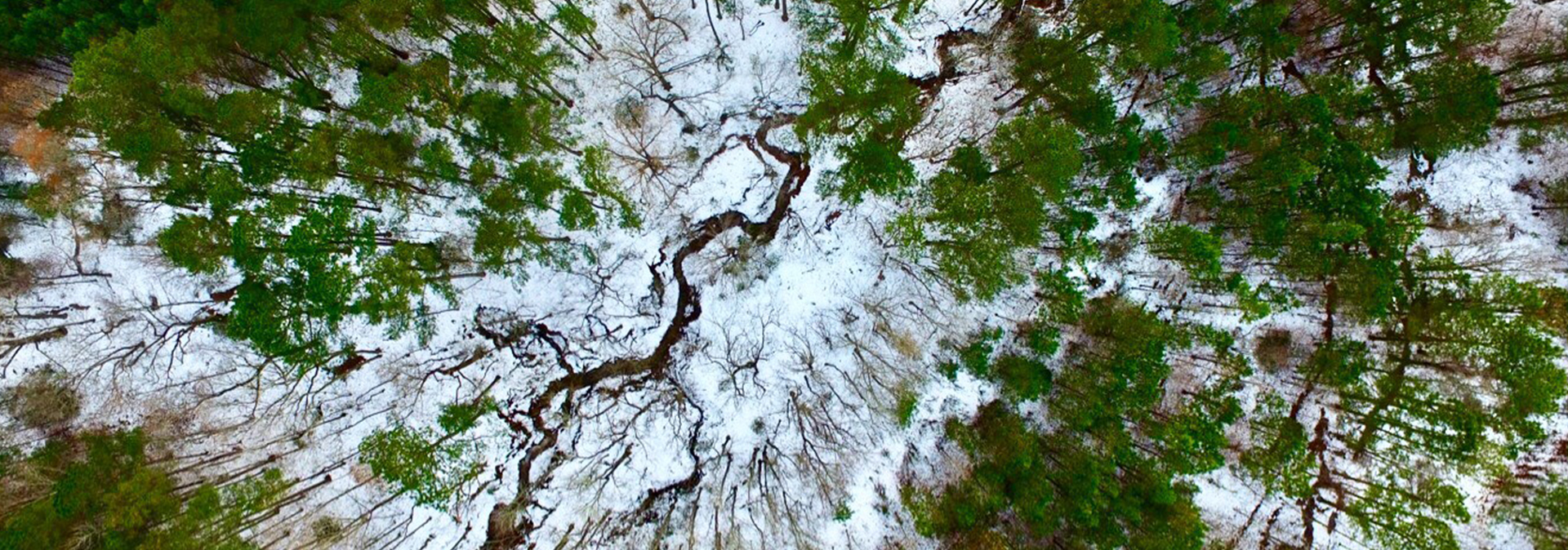 Aerial of forest with stream